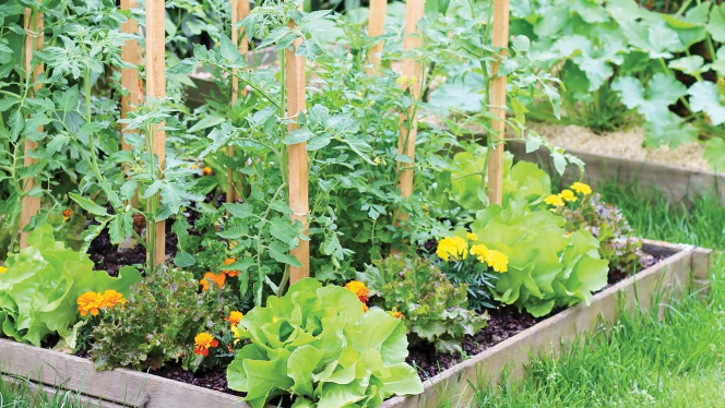7 Organic Gardening Tips For The Beginning Grower