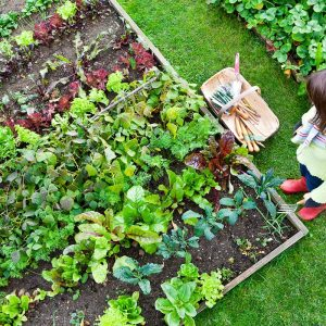 Gardening In A Small Space – How Can I Maximize Yields?